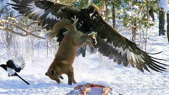 БЕРКУТ - крылатый убийца