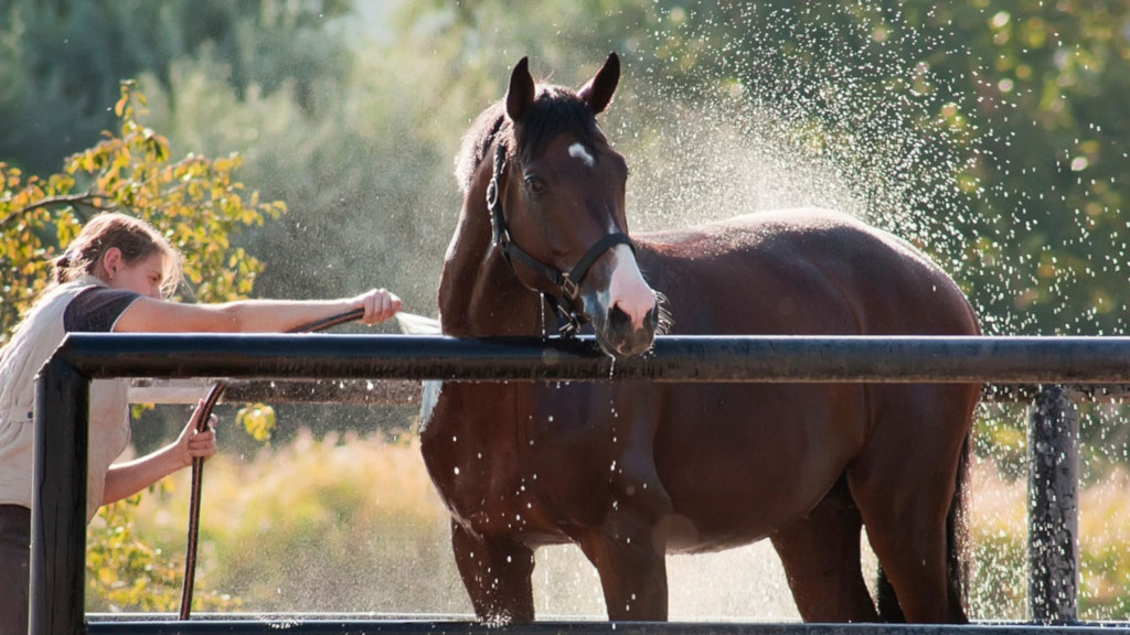 Лошади: содержание, уход
