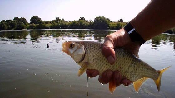 Ловля крупной плотвы на река Ока