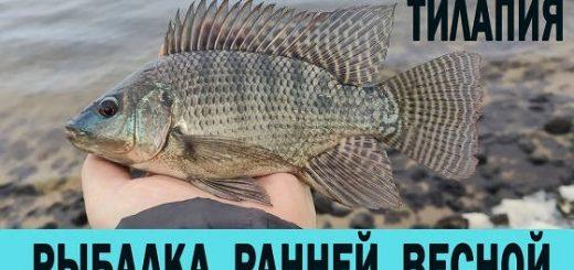 Рыбалка ранней весной на ТИЛЯПИЮ