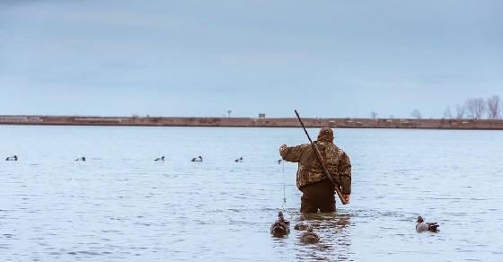 Правила охоты с подсадной