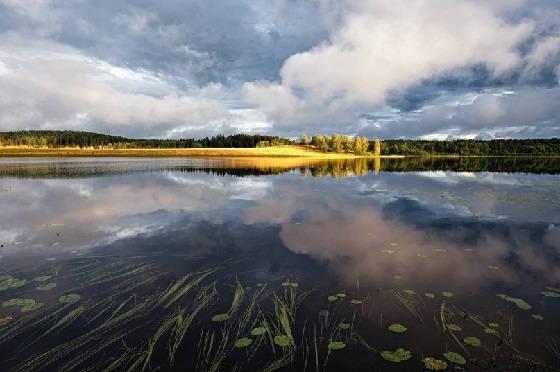 Ловля леща в озере
