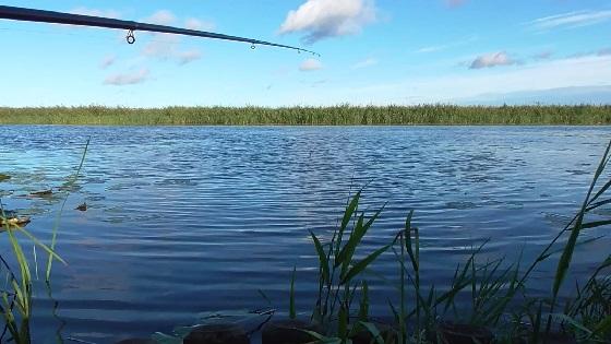 Рыбалка в городе на поплавок