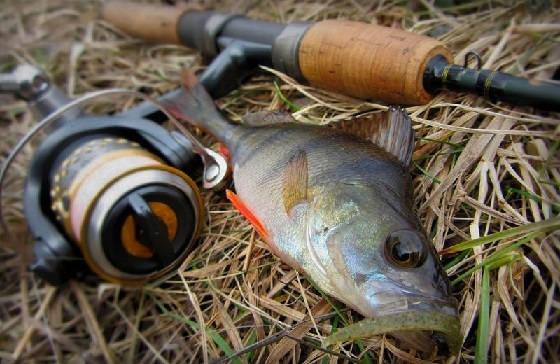 Джиговая рыбалка на реке