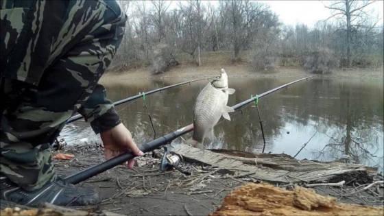 Ловля крупного карася весной