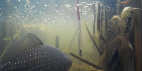 ловля карася с подводной камерой