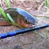 рыбалка на черногривого хариуса в Себяне