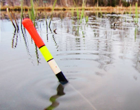 жор крупного карася на поплавок в диких местах