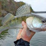 непредсказуемая рыбалка на судака