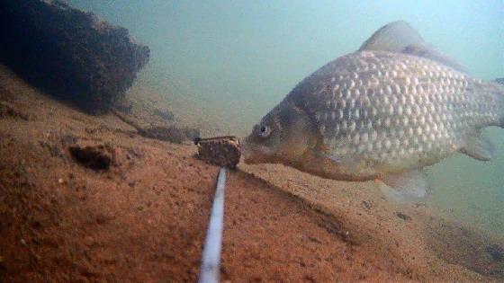 Реакция Рыбы на Горелый Хлеб