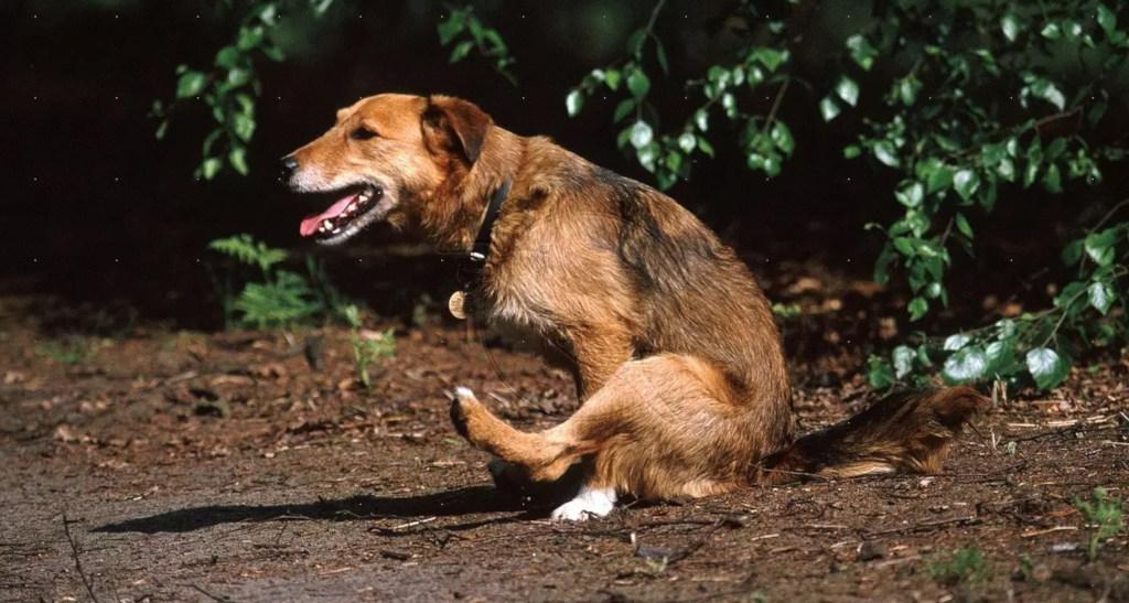 гельминты у собак