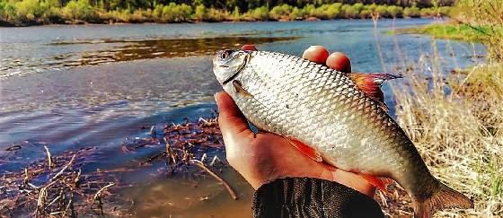Рыбалка на поплавок в мае