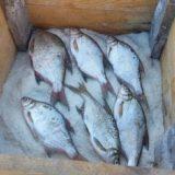 Крупная рыба сухим посолом