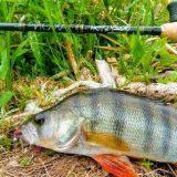 Crazy Fish Arion для берегового и лодочного джига
