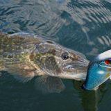 Рыбалка на джеркбейты весной