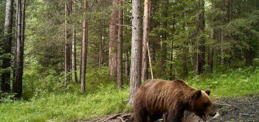 Охота на Медведя в глухой тайге