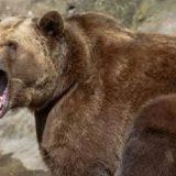 Охота на медведя во Владивостоке