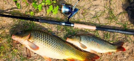 Рыбалка на две снасти с одинаковыми наживками