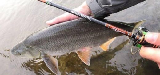 Рыбалка на Спиннинг AVATAR 732 L