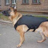 бронежилет для собаки