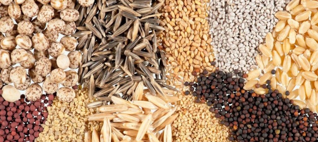 семена купить оптом