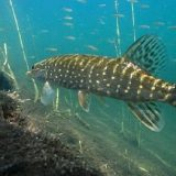 Рыбалка на Хищника в Июне