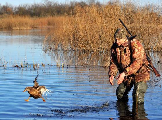 Подготовка к охоте на уток