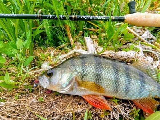 РЫБАЛКА на Crazy Fish ARION