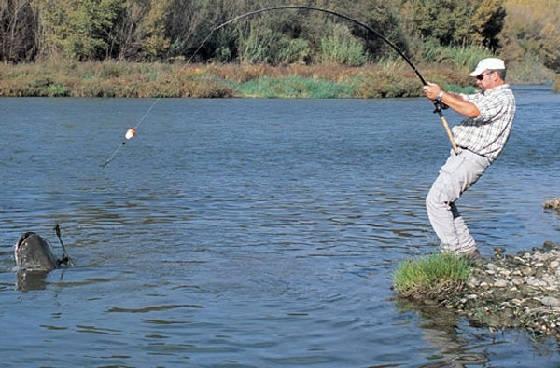 Снасти для ловли сома с берега