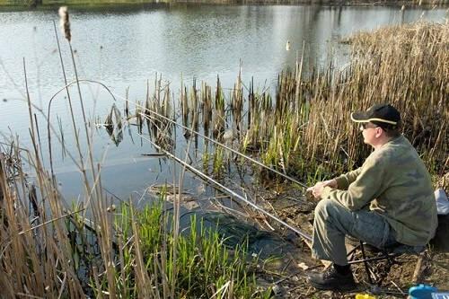 Прикармливать карася на рыбалке или нет