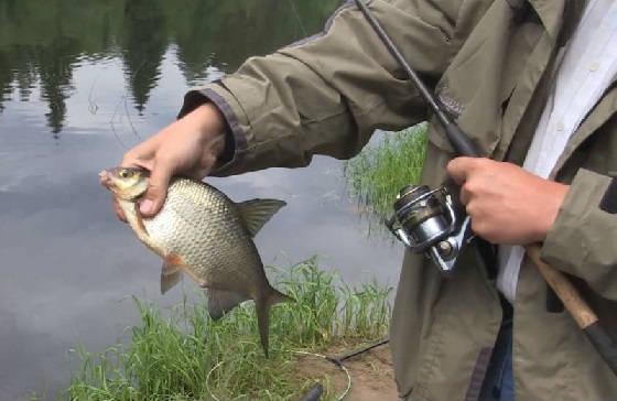 Ловля леща в реке Волга на фидер