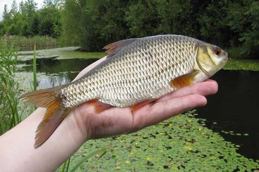 Рыбалка на плотву в июле