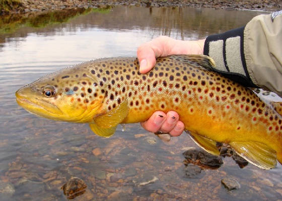 Рыбалка в диких местах Канады
