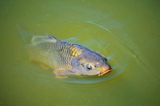 Рыбалка В ЖАРУ на КАРПА