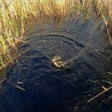 Рыбалка на паук в карасёвом болоте