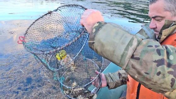 Ловля краба и креветки на мордушки