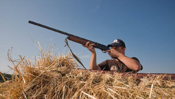 Разведка по вяхирю перед сезоном охоты