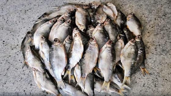 Как засолить и завялить рыбу летом в жару