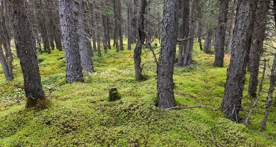 укрытие из мха в лесу