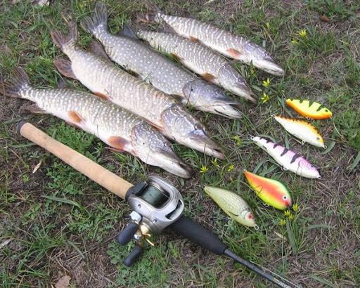 Рыбалка на щуку в августе на джеркбейты