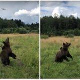 Реакция медведя на квадрокоптер