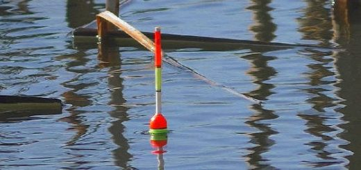 Ловля толстолоба на поплавок: ПРАВИЛЬНАЯ оснастка