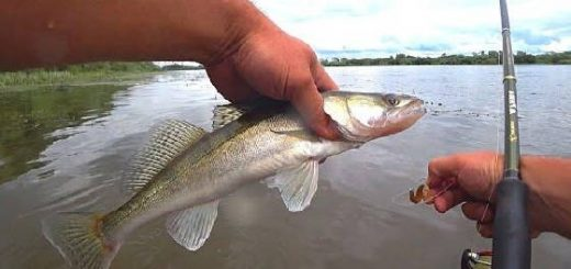 Рыбалка на донки и отводной поводок