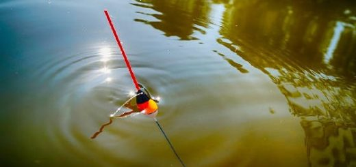 Рыбалка на поплавок: клёв рыбы вечером