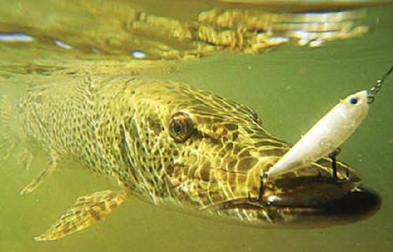 Рыбалка на спиннинг в августе